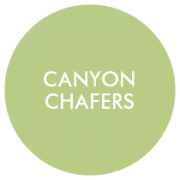 Canyon Chafers